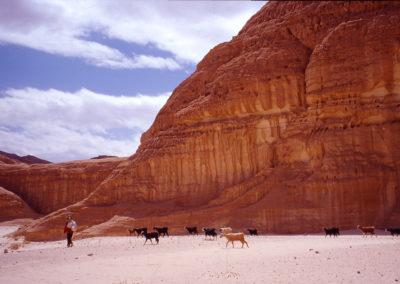 Ziegenherde - Morgens treiben die Mädchen und Frauen die Herden in die Täler hinaus, wo sie etwas zu fressen finden.