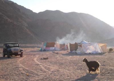 Modernes Zeltlager - Modernes Zeltlager, das nur für einige Wochen besteht. Die Leute haben in den Dörfern oder in der Stadt feste Häuser aus Beton, in denen sie dauerhaft leben. Nur wenn es in der Wüste geregnet hat, leben sie wieder für eine Weile in Zelten wie früher.