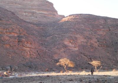 Kleine Akazien - Akazien, die einst in allen Tälern der Wüste in großer Zahl wuchsen und die viele hundert Jahre alt werden, sind heute am Aussterben. Die meisten Bäume trocknen aufgrund des gesunkenen Grundwasserspiegels aus und werden dann von Beduinen als Brennholz genutzt. Aufgrund des mangelnden Regens können keine neuen Bäume angepflanzt werden.