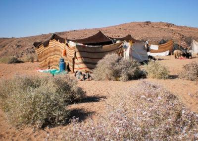 Zelt mit Gasflasche - Ein traditionelles Zelt mit moderner Energieversorgung: einer Gasflasche, die zum Kochen verwendet wird. Im Vordergrund sieht man Zilla, die mit dem Winterregen hoch aufgeschossen ist, üppig blüht und ein Leckerbissen für Ziegen, Schafe und Kamele ist.